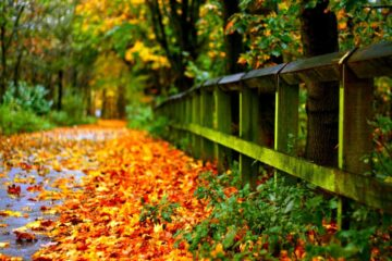 Choosing Landscapes Which Season Should Hang on Your Wall